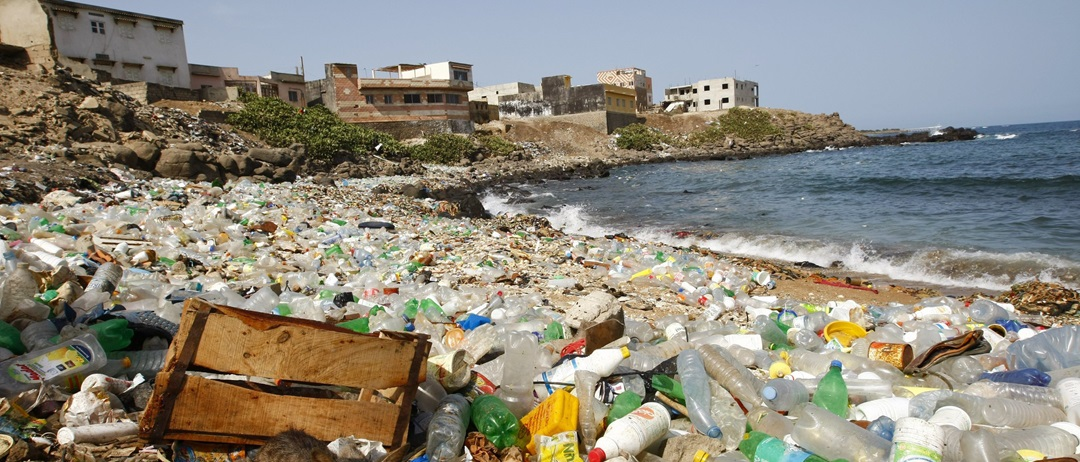 Przez plastik w morzach giną miliony zwierząt.