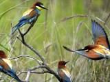 Ptaki zjadają 400-500 milionów ton owadów rocznie