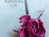 Latawce, Agnieszka Lis - recenzja