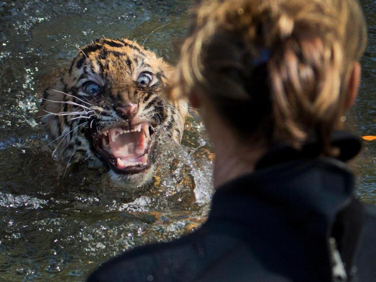 In the Real Life of Pi, the Tiger eats Pi