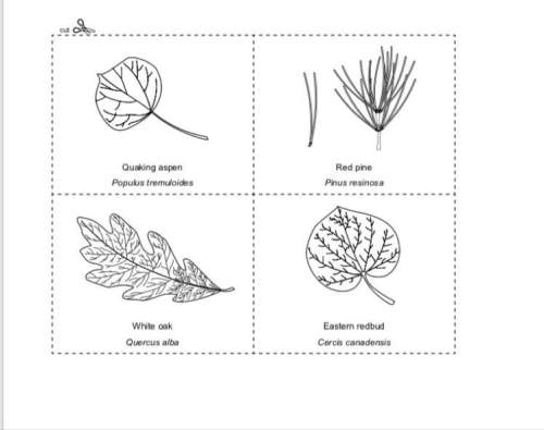 Complete a dichotomous key for the 10 leaves on the common
