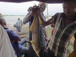 La cité des pêcheurs de Kinkole : le plus grand marché de poissons de Kinshasa 2