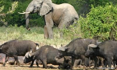 Parc national de la Salonga: habitat de plusieurs espèces endémiques 2