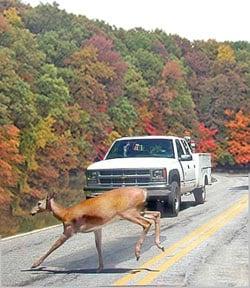 Prevent Michigan deer collision