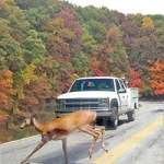 Michigan deer collisions