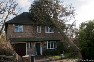 Michigan Tree Insurance Coverage