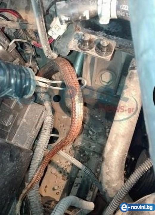 Змия в двигателя