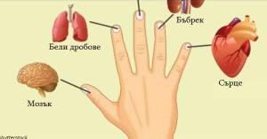 Всеки пръст е свързан с два органа: японски метод за самолечение за 2 минути