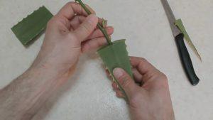 Просто боцнах стръкче роза в лист алое и след 7 дни вече имаше коренчета!