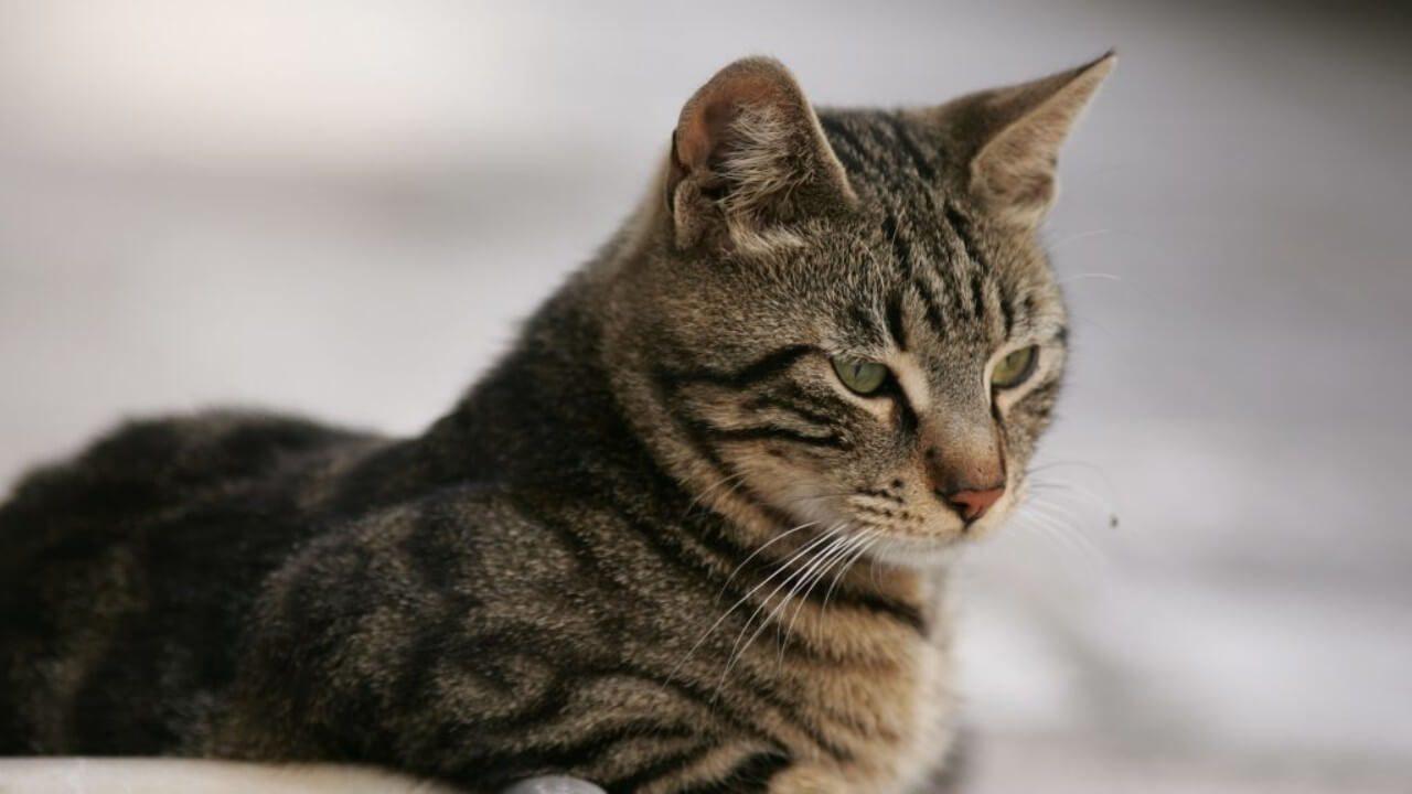 ΣΟΚ στη Σαλαμίνα: Γυναίκα κατηγορείται ότι σκότωσε γάτα με σκούπα
