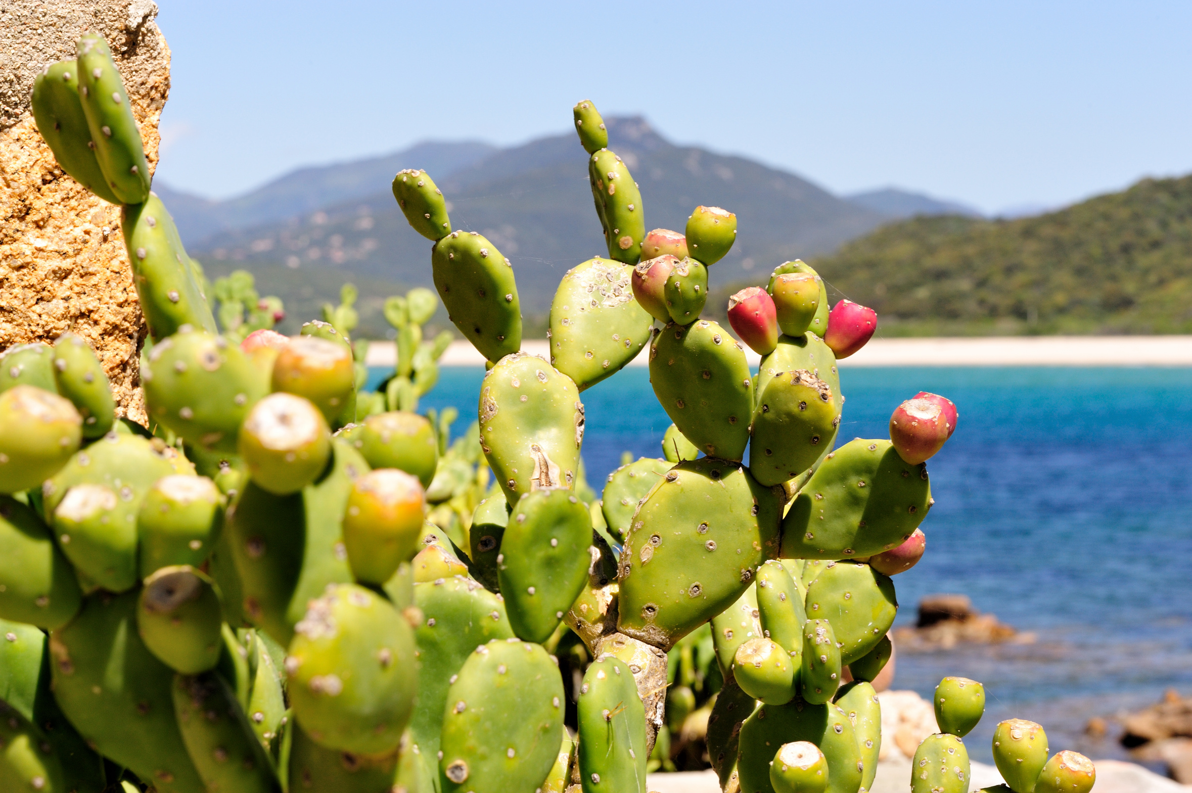 https://i0.wp.com/e-preaklypear.byethost13.com/wp-content/uploads/2015/02/golfe-valinco-corse-avec-figues-barbarie-87349.jpg