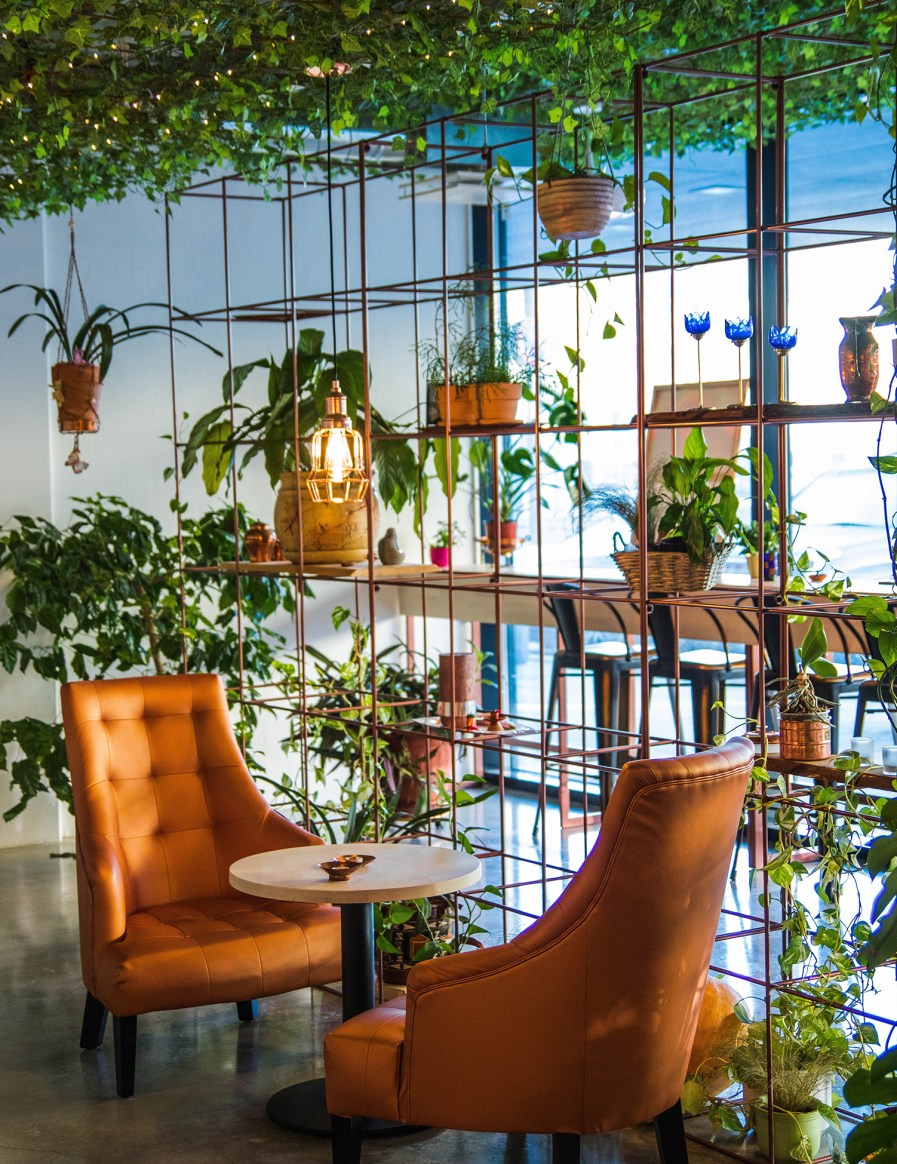 a seating area with vines growing on the ceiling