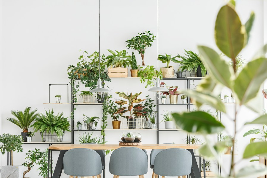 a dining room with a shelf of indoor plants