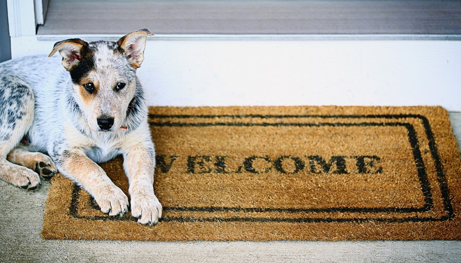 A dog lying beside a welcome doormat