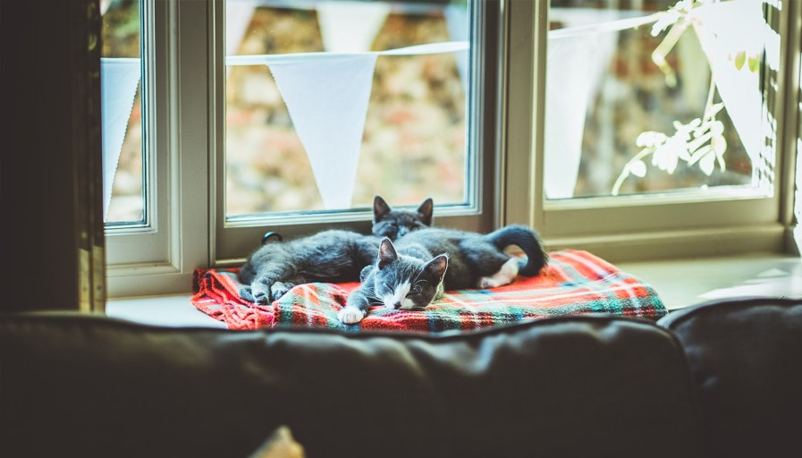 Two cats on a bed by the window