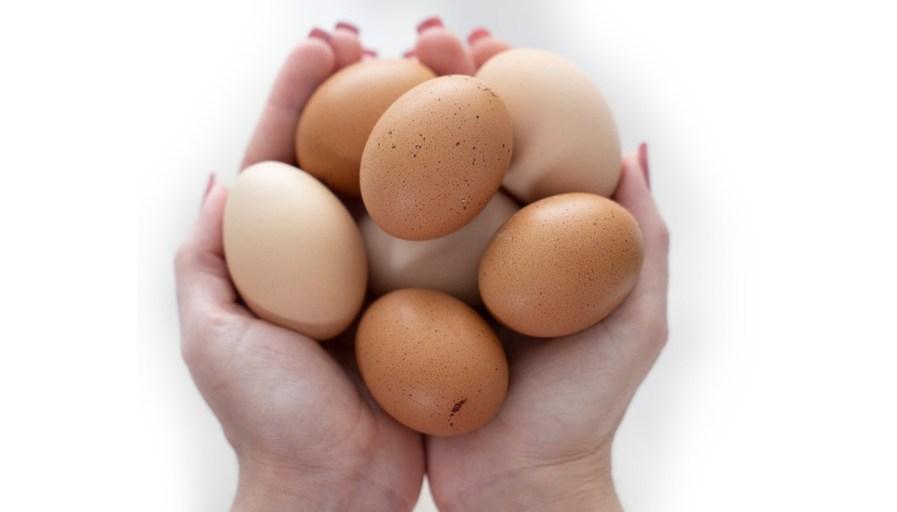 hands holding fresh grown eggs