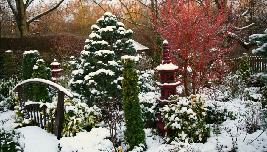 A landscaped garden on a winters day