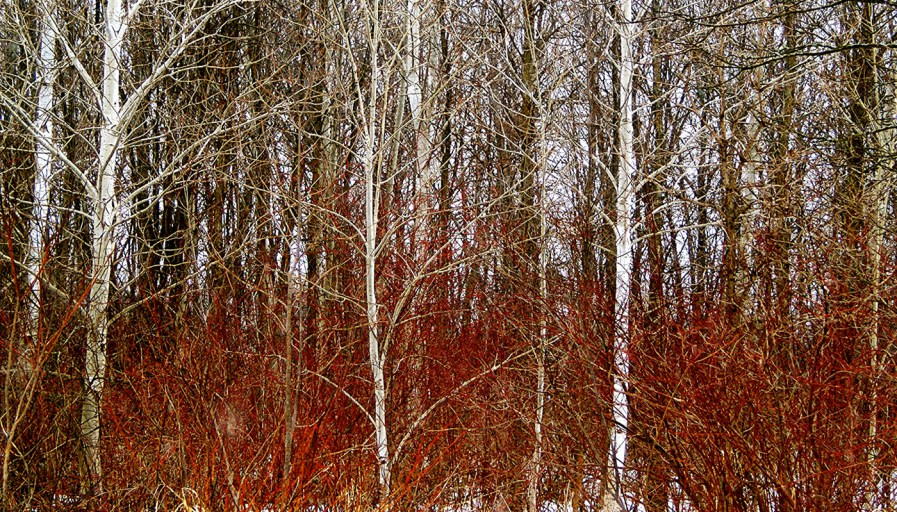 A forest on a winters day