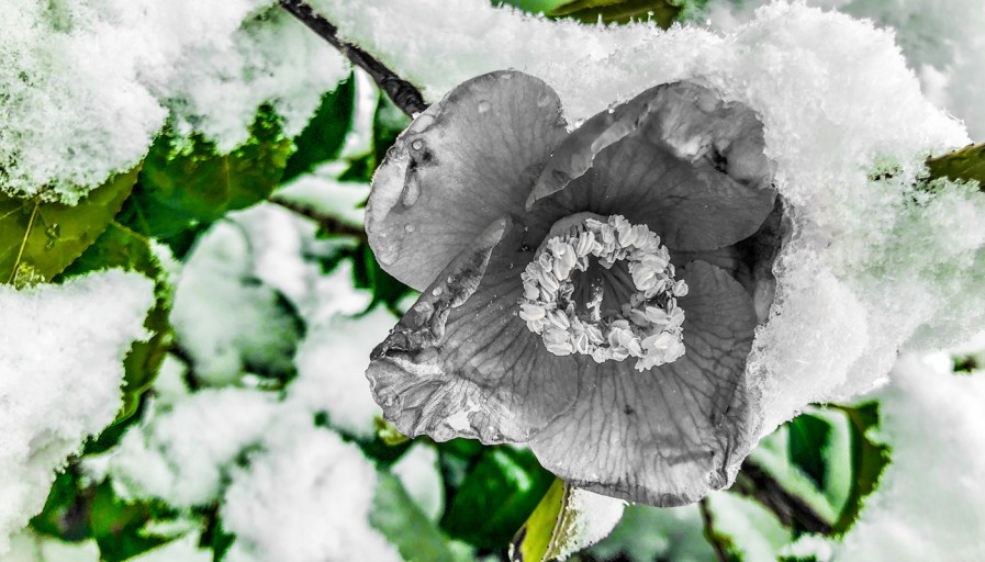 An outdoor winter flower with a fresh bed of snow.