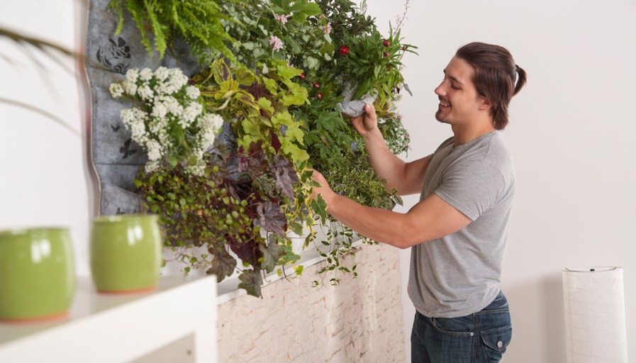 a man watering a living plant wall mounted on a wooden board