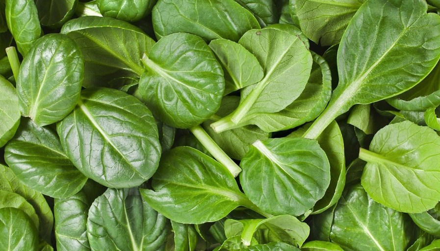 a close up of a pile of spinach
