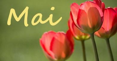 Rote Tulpen auf grünem Hintergrund