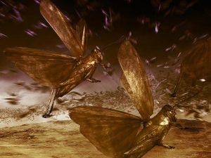 locust swarms
