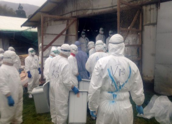 Bird flu was detected in Kumamoto, southwestern Japan