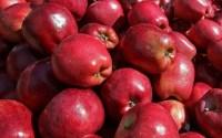 Αυξημένη η σοδειά μήλων στο Κεντρικό Πήλιο
