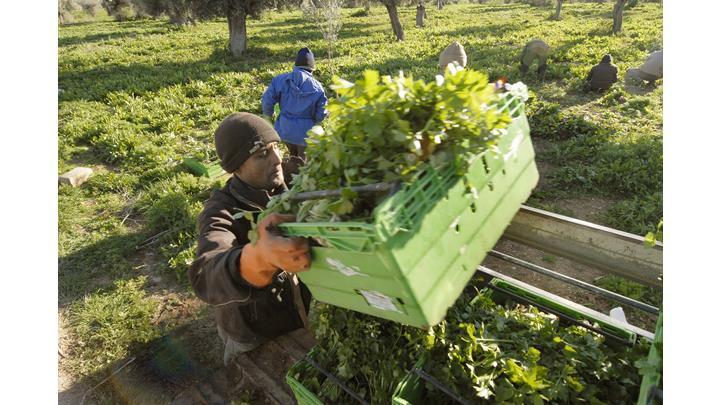 Αναβρασμός σε αγρότες και κτηνοτρόφους της Μαγνησίας – Ενόψει εξόφλησης ενιαίας ενίσχυσης, εξισωτικής και de minimis