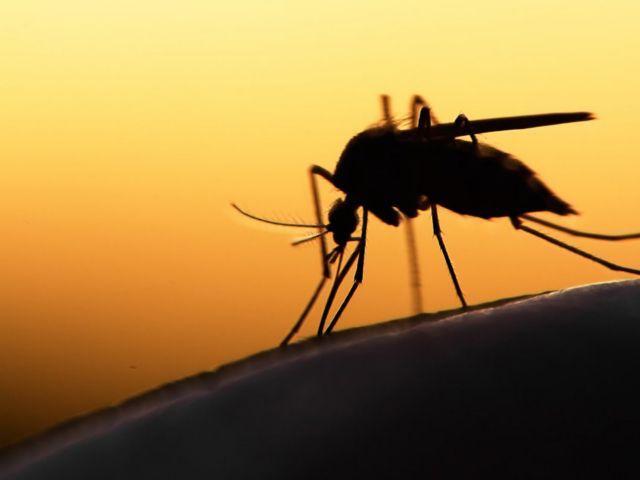 Διεύθυνση Υγείας: Καμπάνα κινδύνου για τα κουνούπια στη Μαγνησία
