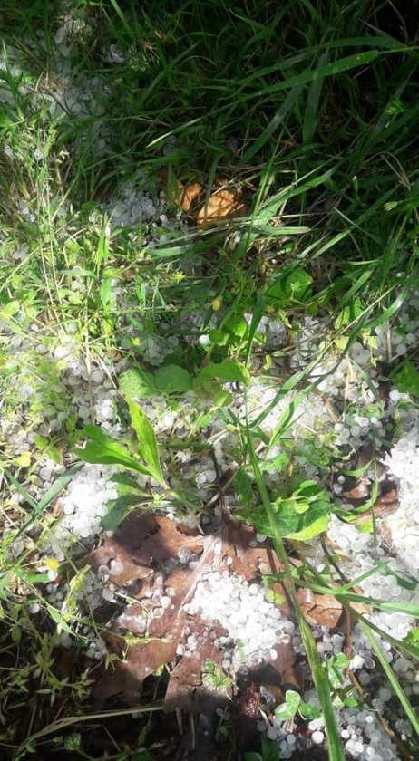 Ισχυρή χαλαζόπτωση στη Ζαγορά κατέστρεψε τα μήλα (photos)