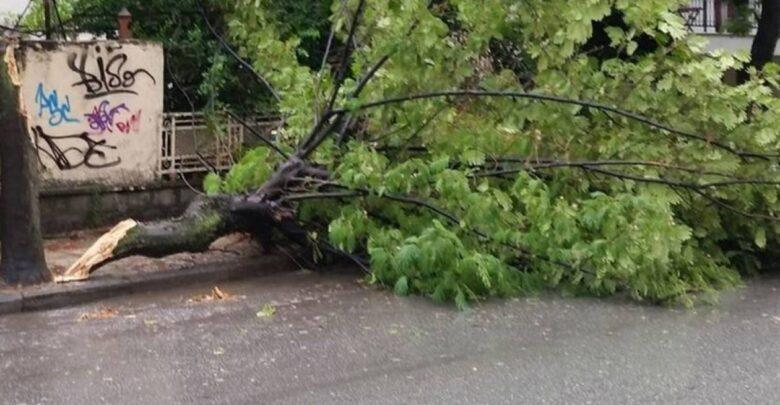 Δέντρο έπεσε στο κεφάλι Λαρισαίου και τον έστειλε στο νοσοκομείο