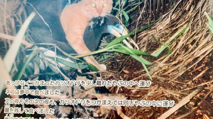 小笠原では捨て猫が問題になっています*保護された島ネコ「マイケル」のお話です
