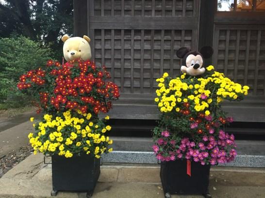 麻賀多神社菊人形