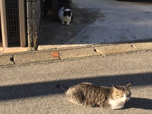対戦中の猫