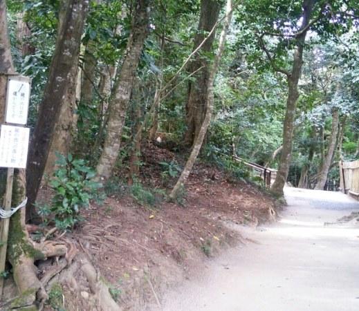 八重垣神社占い池へと続く道