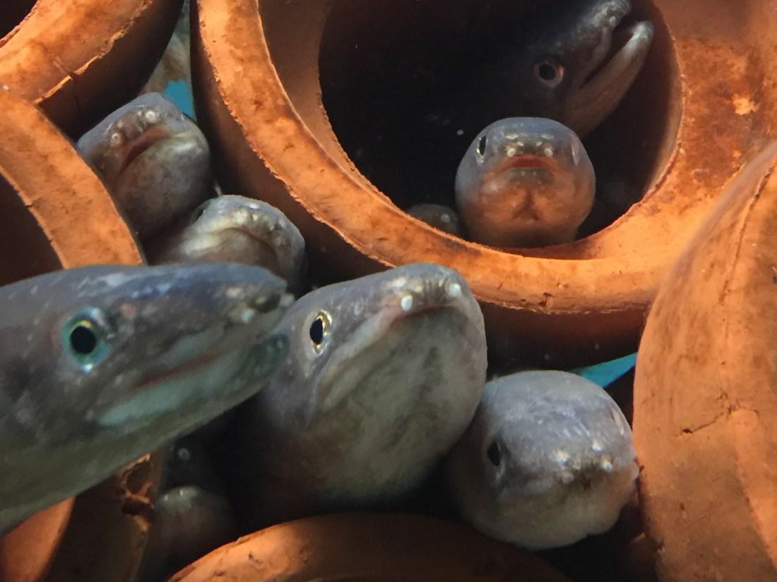 宮島水族館の魚
