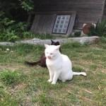 千葉県房総半島:内房で出会ったネコたち