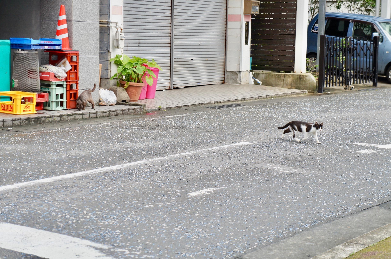 奄美大島のネコ
