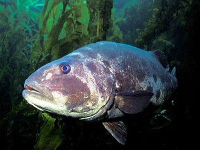 fish-23976