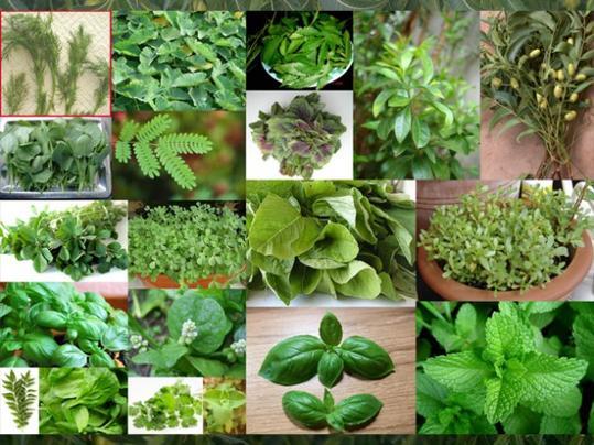 Καλλιεργήστε στο σπίτι σας θεραπευτικά βότανα