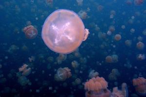Τσίμπημα από τσούχτρα στην θάλασσα: Τι πρέπει να κάνετε