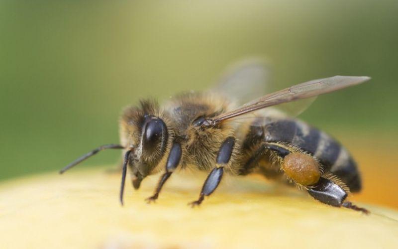Τσίμπημα από σφήκα ή μέλισσα: Το γιατροσόφι που θα σε ανακουφίσει