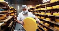 Робочі на сирну фабрику
