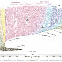 Religion Tree Diagram The Open Window Plot Voici L 39arbre De 39évolution Toutes Les Espèces Ou