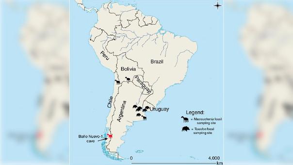 Mapa de los sitios que producen ejemplares de Toxodon y Macrauchenia en América del Sur.