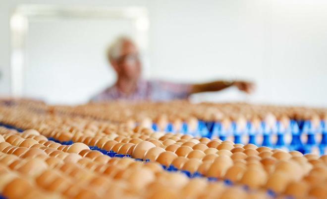 Qu es el fipronil Qu pasa si como huevos con fipronil