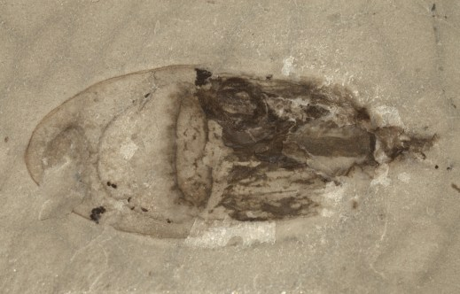 Resultado de imagen para Qingjiang fósiles