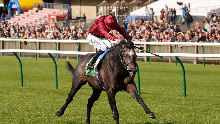 Image result for Roaring Lion horse